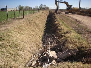 Reforestación y limpieza de canales