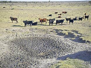 Prorrogan emergencia agropecuaria