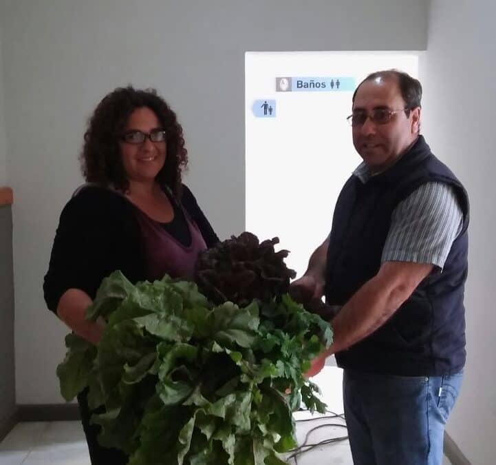 Primera cosecha de verduras de la Unidad Hortícola Municipal Nº1
