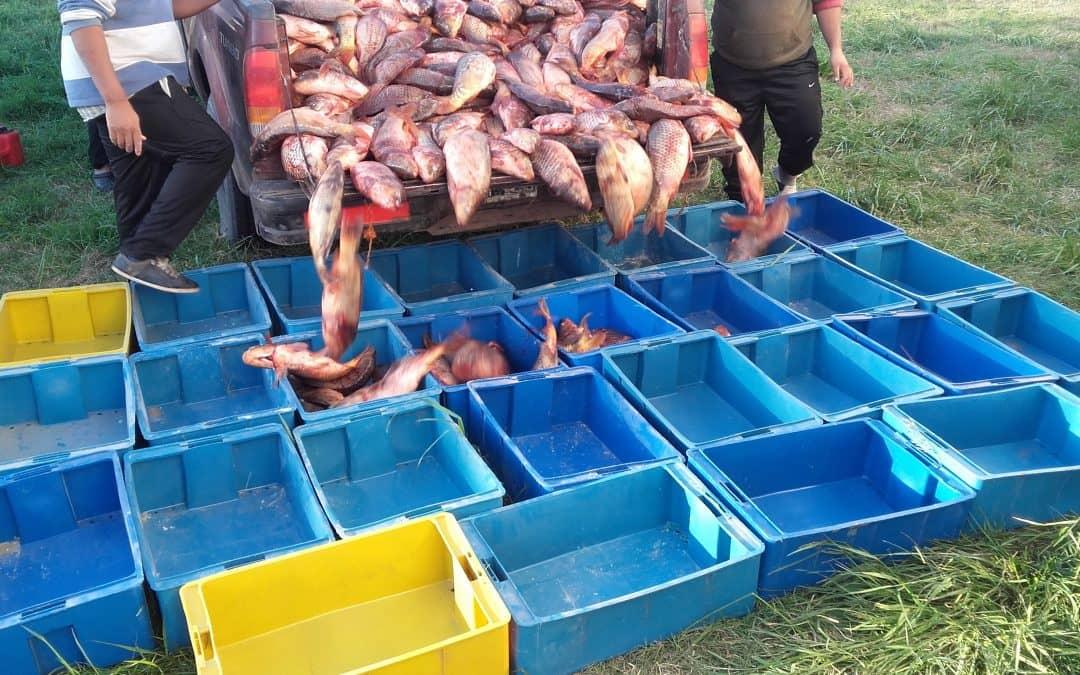 Transportistas de pescado podrán obtener sus habilitaciones en la Oficina de Producción