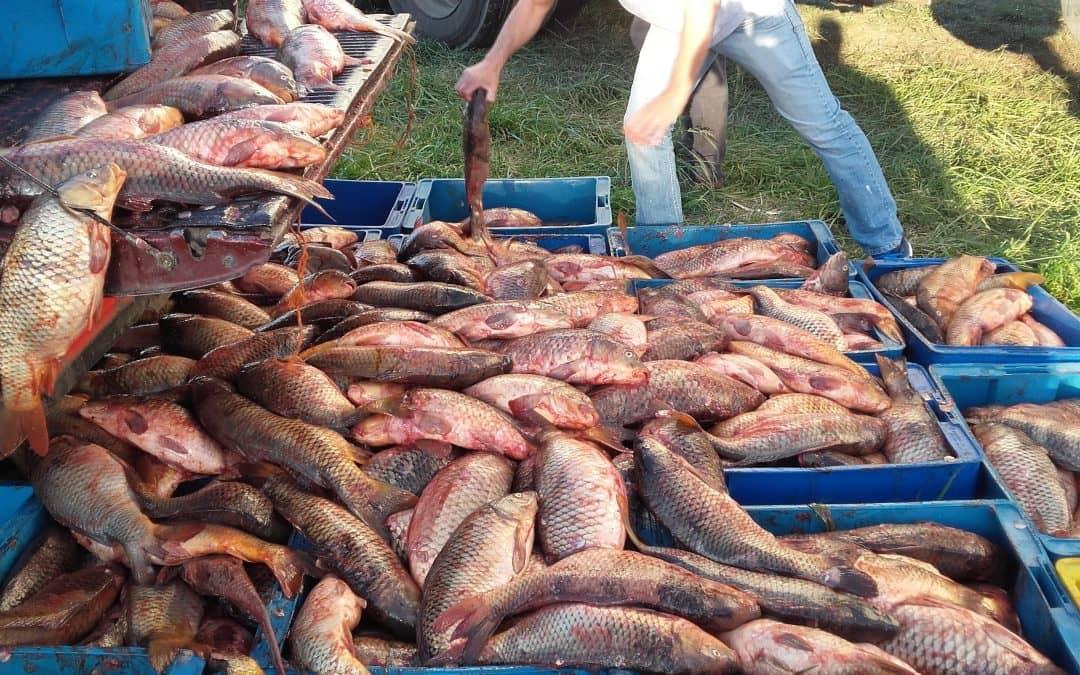 Pesca: se trabajó en la formalización, valor agregado y nuevos mercados para el sector