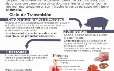 BROMATOLOGÍA DA RECOMENDACIONES Y PIDE TOMAR RECAUDOS EN EL CONSUMO DE PRODUCTOS PORCINOS PARA PREVENIR LA TRIQUINOSIS