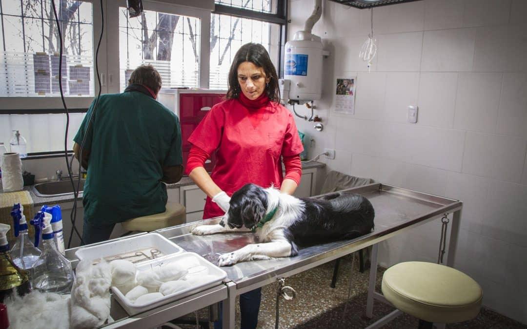 Zoonosis realiza la castración de perros tras la denuncia de vecinos