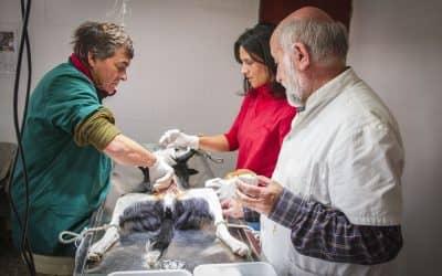Ya se hicieron 1180 castraciones en el centro de zoonosis en 9 meses