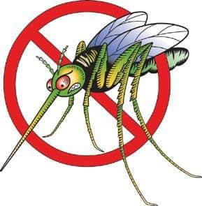 Dengue: el Municipio inicia campañas de prevención el fin de semana