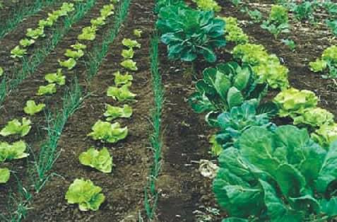 Se realiza mañana una reunión con productores sobre herramientas agroecológicas