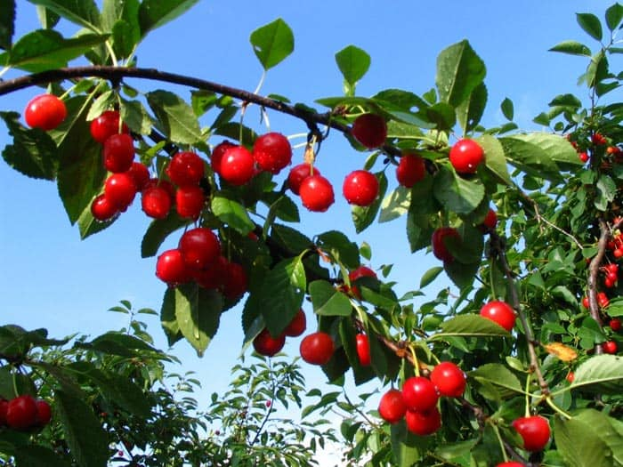 Registro de Frutos y Producción de Origen
