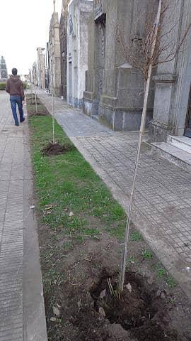 Arbolado del Cementerio