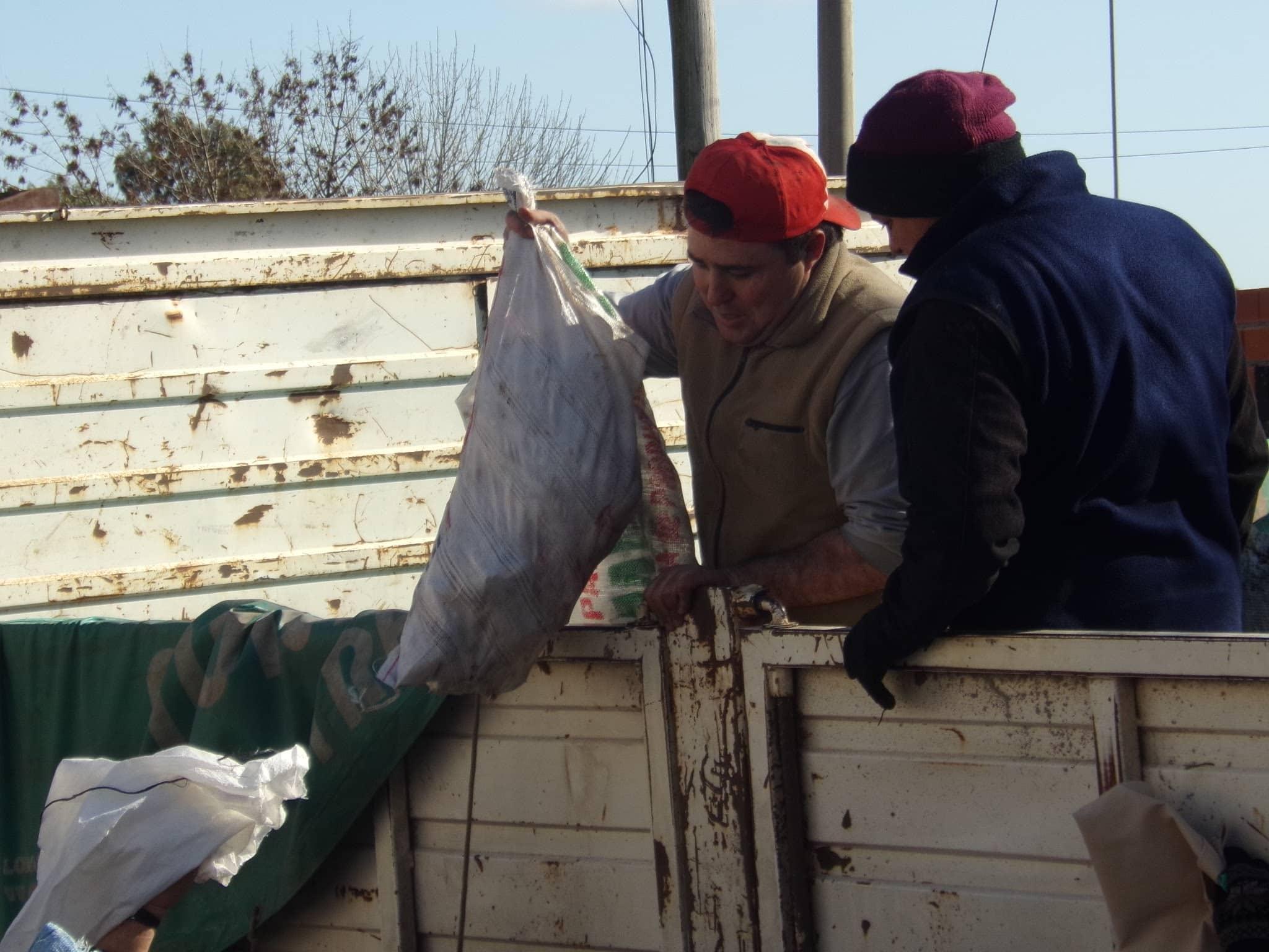 Continúa la entrega de gallinas para consumo